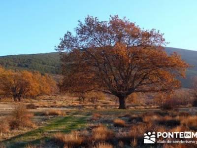 Senderismo Hayedo de Montejo (Senderismo Madrid-Senderismo Guadalajara-Senderismo Segovia)